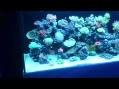 How and why to do a spring clean on your aquarium