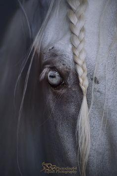 Blue Eye by PHOTODINE64 Sandrine Philippe Branquart on 500px