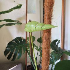 Indoor Shade Plants, Outdoor Plants, Inside Garden, Inside Plants, House Plants Decor, Plant Decor, Landscaping Plants, Garden Plants, Outdoor Landscaping
