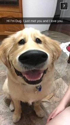 There's a new Snapchat filter that makes dogs look exactly like Dug.