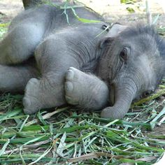 this girl keeps spoiling me with these elephant pictures:)