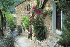 How to care for Bougainvillea in cold weather