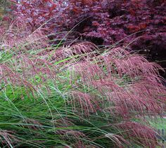 Fall and Winter Grasses — Joseph Valentine