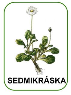 Spring Activities, Activities For Kids, Crafts For Kids, Elementary Science, Spring Flowers, Teaching Kids, Montessori, Plant Leaves, Flora