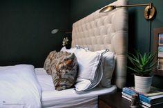 dg: New Flat Master Bedroom Redo, Home Bedroom, Bedroom Furniture, Bedroom Decor, Bedroom Ideas, Bedroom Paint Colors, Room Colors, Farrow And Ball Bedroom, Dark Green Walls