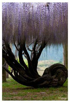 Bildergebnis für bemerkenswerte bäume