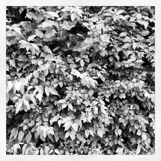 Interesting photo of a black and white foliage