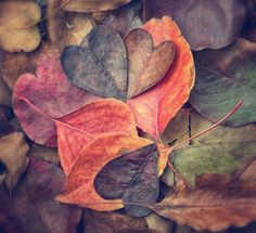 Heart leaves wallpaper