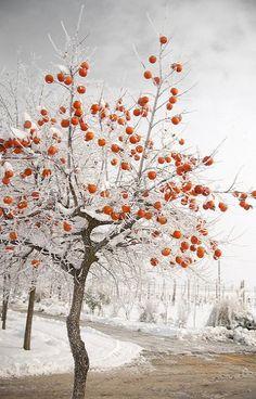 Winter.. Lugo, Emilia Romagna, Italy   Flickr - Photo by BeboFlickr