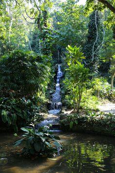Botanical Gardens - Rio de Janeiro, Brazil