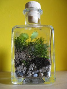 That's the favorite one of my eternal terrarium project. As always i put some gravel on the bottom, then some sand and finally dirt and moss. It also contains a little sapling - Hope you enjoy my random stuff ;-)