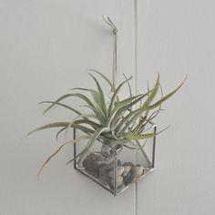 http://www.abjglassworks.com/product/murus-terrarium-kit-small