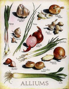 Fruit And Veg, Fruits And Vegetables, Veggies, Botanical Drawings, Botanical Prints, Cooking Tips, Cooking Recipes, Nature Plants, Food Facts