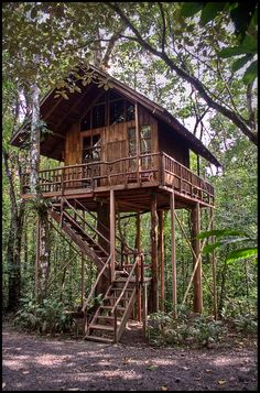 Treehouse in Costa Rica, Swiss family Robinson style.