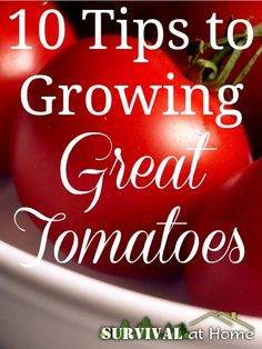 10 Tips to Growing Great Tomatoes | Survival at Home | #prepbloggers #homegrown #tomatoes