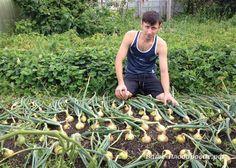 Summer House Garden, Home And Garden, Farm Gardens, Outdoor Gardens, Vegetable Garden, Garden Plants, Small Farm, Agriculture, Garden Landscaping