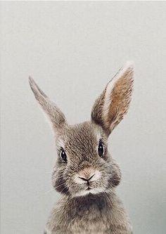 ♡ Breakfast at Chloe ♡ - Cathy F- # Breakfast - Hundebabys - Adorable Animals Cute Baby Animals, Animals And Pets, Funny Animals, Animals Images, Bunny Images, Jungle Animals, Nature Animals, Wild Animals, Bunny Art