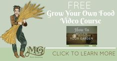 Learn how to homestead on less than an acre of land in your own backyard and turn your homesteading dreams into a self sufficient reality! Composting Methods, Bee Traps, Soil Improvement, Grow Your Own Food, Free Gift Cards, Misfits, Garden Plants, Homesteading
