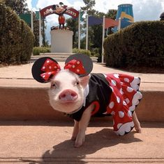 Oh my! Appeals to my love of pigs and Disney.