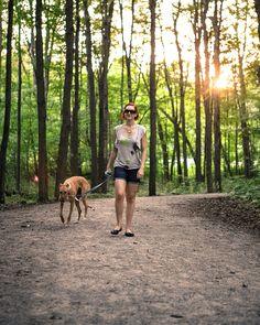 Sadie the Greyhound - petsit for 7-10 days in August 2016 #greyhound #greyhounds #dog #rescue #sighthound #hound #dogrescue #petsitting #pet #animal #greyhoundrescue