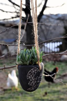 Hanging Succulent Planter is s great way when you have animals on the loose. If you have goats it may not be a solution but then again you know that!
