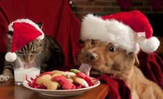 If you're planning a Christmas party, and have parts, here are some Christmas party pet tips to help you keep the holidays festive and fun for all.