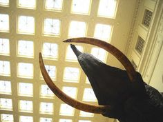 Chicago Field Museum Ceiling