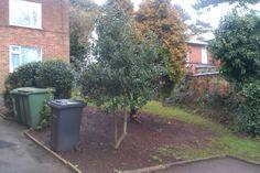 Trees crown raised and debris removed on Sidney Street by Kris Jinks team