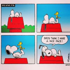 You do have a nice face, Snoopy. Snoopy Cartoon, Snoopy Comics, Peanuts Cartoon, Peanuts Snoopy, Peanuts Comics, Happy Comics, Snoopy Love, Snoopy And Woodstock, Peanut Pictures