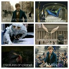FBAWTFT- only a true potterhead will understand this
