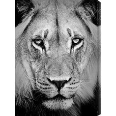 Punctuate the living room or foyer with this bold giclee print, featuring a portrait of a lion in black and white.Product: Giclee...
