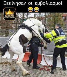 Weekend Images, Adult Humor, Funny Jokes, Police, Horses, Animals, Carpe Diem, Yolo, Gabriel