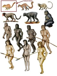 Prehistoric Man, Prehistoric Creatures, Early Humans, Human Evolution, Ancient Artifacts, Science And Nature, Natural History, Geology, Archaeology