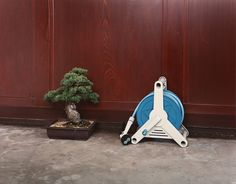 Takashi Yasumura - A Bonsai Tree and a Watering Hose, 1999  From the series Domestic Scandals  C-Print