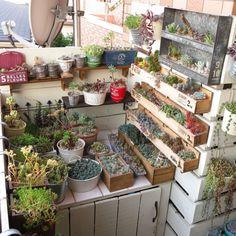 nan_tocoさんの、NO GREEN NO LIFE,ベランダガーデニング,ベッド周りではありません,ベッド周り,ブリキ プランター,木製プランター DIY,多肉棚 DIY,多肉植物 寄せ植え,多肉植物,のお部屋写真