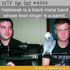 bird band member