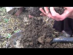 ~A Peek Into Our Soil Food Web (VIDEO)~ - Reformation Acres