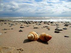 See shells, seashells, on the seashore