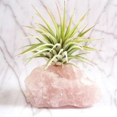 simple DIY idea to display an air plant - possibly one of the most interesting yet undemanding plants for your home or office!A simple DIY idea to display an air plant - possibly one of the most interesting yet undemanding plants for your home or office! Indoor Garden, Indoor Plants, Air Plants Care, Air Plant Display, Crystal Garden, Air Plant Terrarium, Plant Art, Cactus Y Suculentas, Cacti And Succulents
