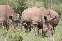 See The Big 5 On A Pilanesberg National Park Safari