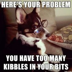 Too many kibbles in my bits.
