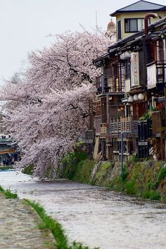Spring in Kamo River, Kyoto, Japan: