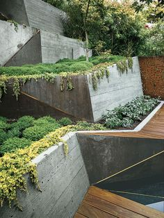 Tadao Ando-inspired backyard garden with concrete retaining walls.