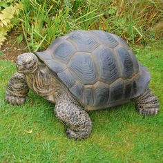 XL EXTRA LARGE REALISTIC / DETAILED RESIN TORTOISE GARDEN ORNAMENT NEW FREE P+P | eBay