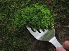 How to collect, transplant, and care for moss. If you want to add moss to your pots or planters, this article explains how to establish it and get it growing. Container Gardening, Micro Garden, Mini Fairy Garden, Gnome Garden, Garden Tools, Fairies Garden, Gardening Blogs, Gardening Supplies, Organic Gardening
