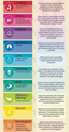 Dog tips in case of signs of unusal health behavior. #dogtips #dogillness