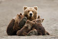 Apapacho en familia. (Bear family hug)