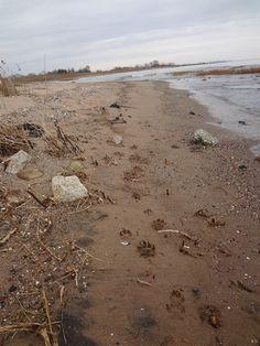 Dog prints on the beach at Staten Island (Great Kills beach).
