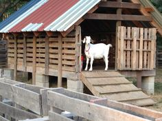 Goat barn, pallets… If you could make it sturdy enough for crazy destructive goats!