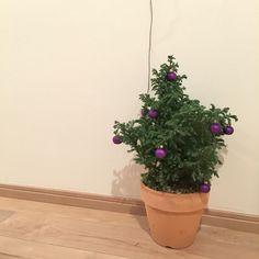 今年のChristmas tree blueberry ornament